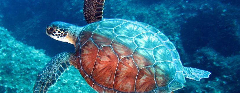 Turtle of North Cyprus