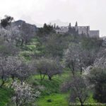 Bellapais Abbey Field North Cyprus Pictures