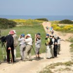 Karpaz bird watching - North Cyprus Pictures
