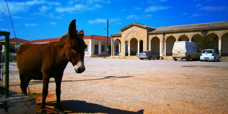 Karpaz 3 - North Cyprus Pictures