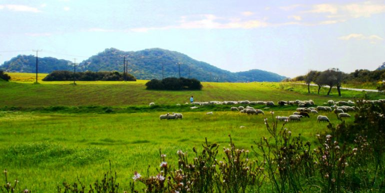 Karpaz 4 - North Cyprus Pictures