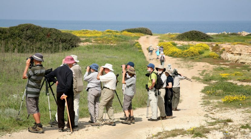 Bird Watching - Karpaz - Northern Cyprus