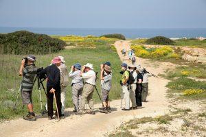Bird Wathing - North Cyprus